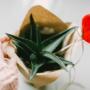 Amor y amistad: ¿Qué regalar?